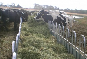 Paton-Feed-Containment-Cows